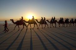 Туристы едут команда верблюдов вдоль пляжа в Австралии стоковое фото