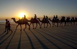 Туристы едут команда верблюдов вдоль пляжа в Австралии стоковая фотография rf