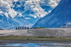 Туристы ехать верблюды Стоковые Изображения