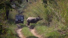 Туристы ехать виллис и наблюдая носорога на путешествии сафари в национальном парке Chitwan видеоматериал