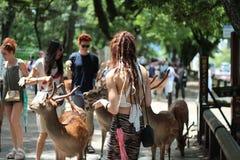 Туристы наслаждаются печеньями с оленями на sideway Стоковые Фото