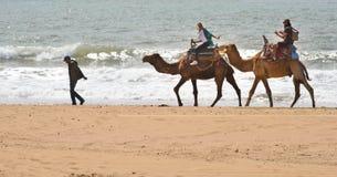 Туристы на верблюдах - марокканськом пляже Essaouira Стоковое фото RF