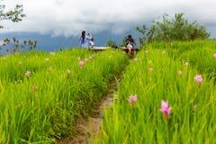 Туристы на цветочном саде горы понедельника Chaem в Чиангмае, Стоковая Фотография