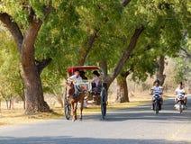 Туристы нося тележки лошади на сельской дороге в Bagan, Мьянме Стоковые Изображения RF