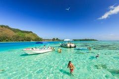 Туристы плавая и подавая акулы и хвостоколовые в красивом море на острове Moorae, Таити ПАПЕЭТЕ, ФРАНЦУЗСКОЙ ПОЛИНЕЗИИ Стоковая Фотография RF