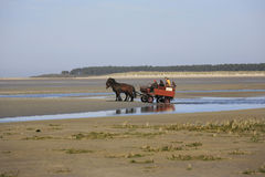 Туристы посещая Сомму преследуют на экипаже лошади, Франции Стоковое Изображение RF