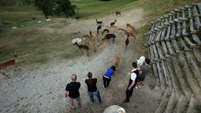 Туристы подавая олени снятые сверху сток-видео
