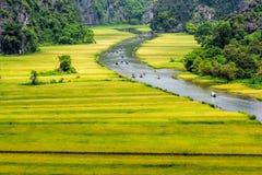 Туристы путешествуя на потоке с зреют прокладки риса с обеих сторон внутренностей потока Стоковая Фотография
