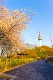 Туристы пути Namsan вишневых цветов башни n Сеула Стоковые Фотографии RF
