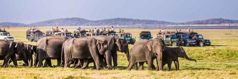 Туристы смотря семью слона Sri Lankan идя из Стоковые Изображения RF