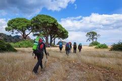 Туристы с рюкзаками на вянуть траве под соснами Стоковые Изображения
