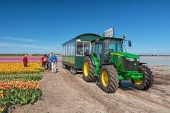 Туристы транспортированы трактором вдоль красивого цветка f Стоковые Изображения RF