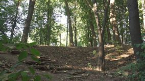 Турист взбирается холм в лесе сток-видео