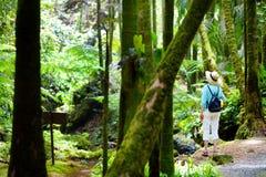 Турист восхищая сочную тропическую вегетацию сада Гаваи тропического ботанического большого острова Гаваи Стоковое Изображение