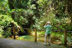 Турист восхищая сочную тропическую вегетацию сада Гаваи тропического ботанического большого острова Гаваи Стоковое Изображение RF