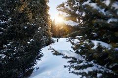 Турист в лесе зимы стоковое изображение