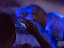 Турист в музее естественной истории Стоковое Изображение