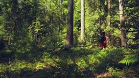 Турист женщины с рюкзаком за ее назад бегами через стрельбу леса от задней части видеоматериал