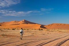 Турист идя к Sossusvlei, пустыня Namib, национальный парк Namib Naukluft, scanic desetination перемещения в Намибии Приключение и стоковое фото