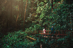 Турист идя на деревянный мост Стоковое Фото