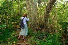 Турист на trekking в джунглях на Доминиканской Республике стоковые фото