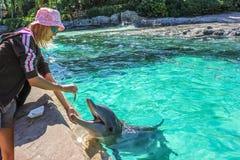 Турист подает дельфин стоковые изображения