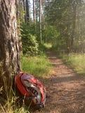 турист рюкзака на следе в древесинах стоковое изображение