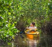 Турист сплавляться в лесе мангровы стоковая фотография rf