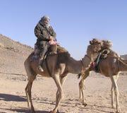 турист старшия 4 верблюдов Стоковая Фотография RF