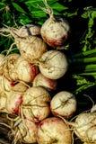Турнепсы на дисплее на рынке фермеров Стоковые Фото