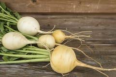 турнепсы овощи сада Стоковое фото RF