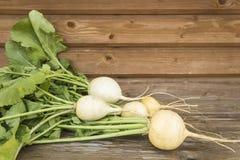 турнепсы овощи сада Стоковое Изображение
