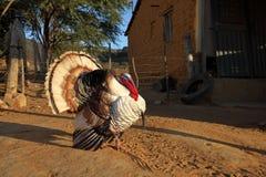 Турция на ухаживании Стоковая Фотография RF