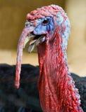 Турция Стоковое Фото