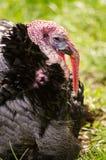 Турция Стоковая Фотография RF