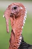 Турция Стоковые Изображения