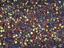 Тухлая предпосылка яблок стоковая фотография