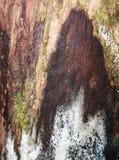 Тухлая старая moldy древесина стоковые изображения rf
