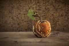 тухлое яблока старое Стоковое Изображение