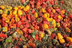 Тухлые овощи Стоковое Фото