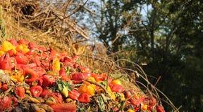 Тухлые овощи Стоковая Фотография