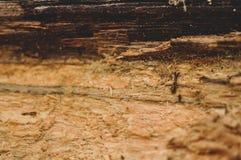 Тухлый деревянный конец-вверх текстуры стоковое фото rf