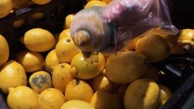 Тухлый, лимон низко-качества в руке девушки Прессформа, избалованные продукты в супермаркете видеоматериал