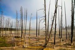 Тухлые деревья Стоковая Фотография RF