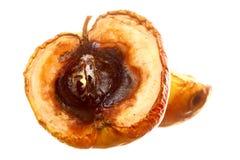 Тухлые изолированные половины яблока. Пищевые отходы. Стоковые Изображения RF
