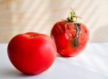 Тухлые томаты Стоковые Фотографии RF