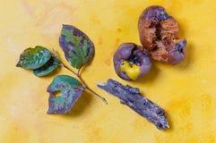 Тухлые яблоки Стоковое Фото