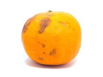 Тухлый апельсин Стоковые Изображения RF