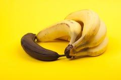 Тухлый банан около пука зрелых бананов, желтой предпосылки Стоковое Изображение RF