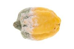 Тухлый желтый лимон Стоковое Фото